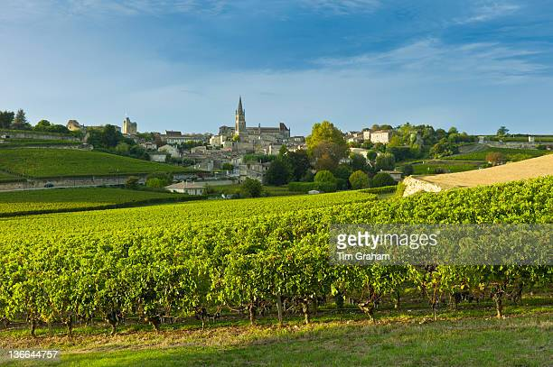 Vineyards in St Emilion, Bordeaux, France