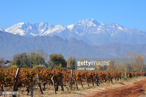 Vineyards in the fall of Mendoza, Argentina