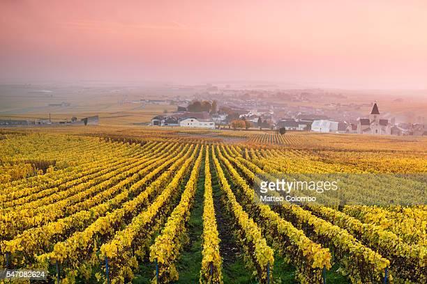 Vineyards in the mist at sunrise, Oger, Champagne, France