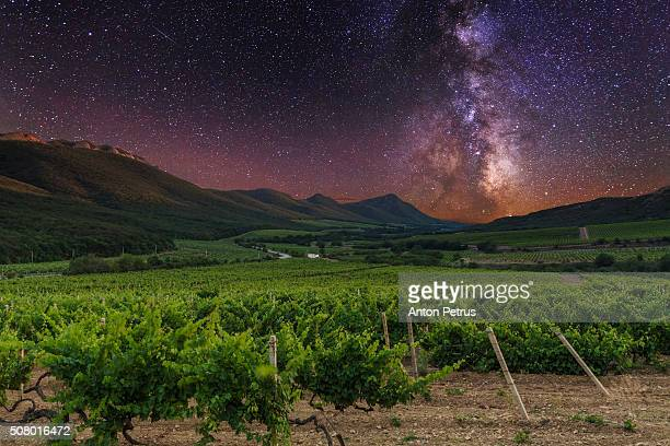 Vineyards in the mountains at night under the stars