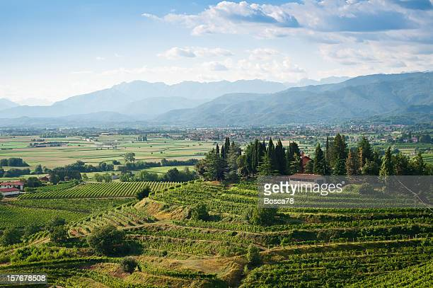 Vineyards landscape view