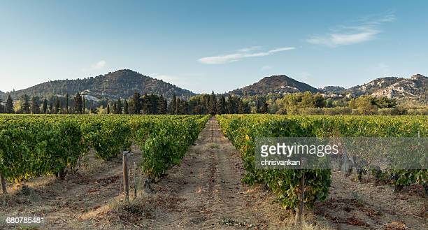 Vineyards, Les Baux-de-Provence, Cote d'Azur, France