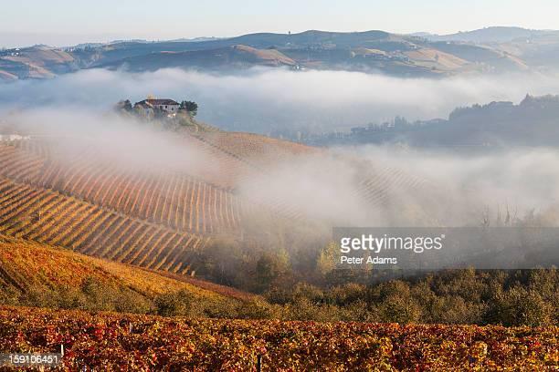 Vineyards, near Alba, Langhe, Piedmont, Italy
