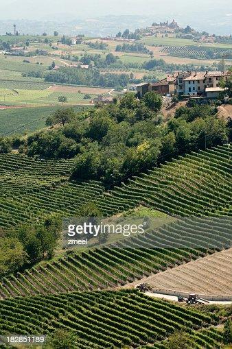 周辺のブドウ園呼ばれる(Piemonte 、イタリア)