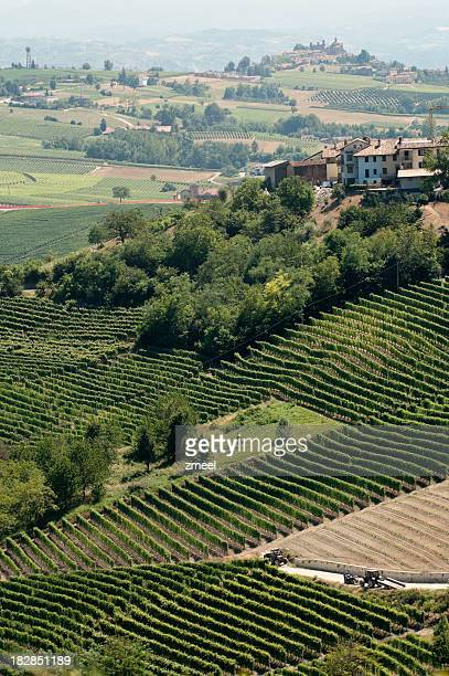 Vineyards near Barolo (Piemonte, Italy)