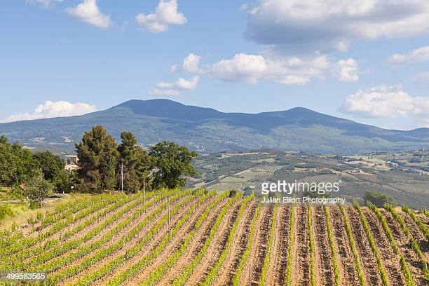 Vineyards near to Montalcino, Tuscany.