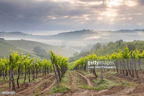 Vineyards near to San Gimignano, Tuscany.