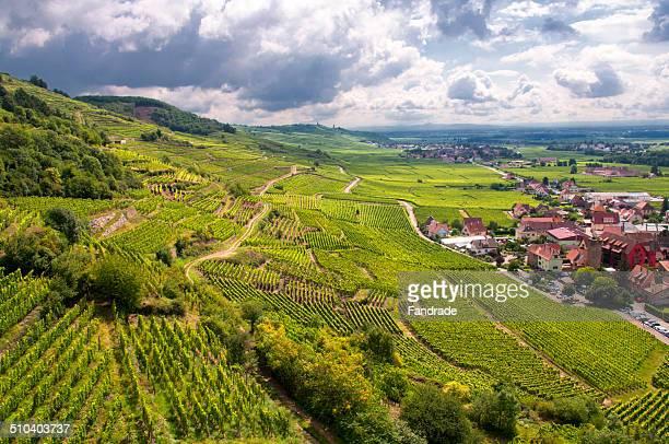 Vineyards of Kaysersberg Alsace France