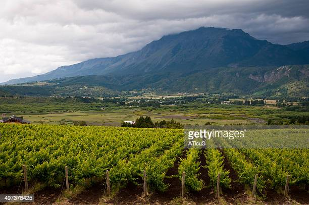 Vineyards of Patagonia