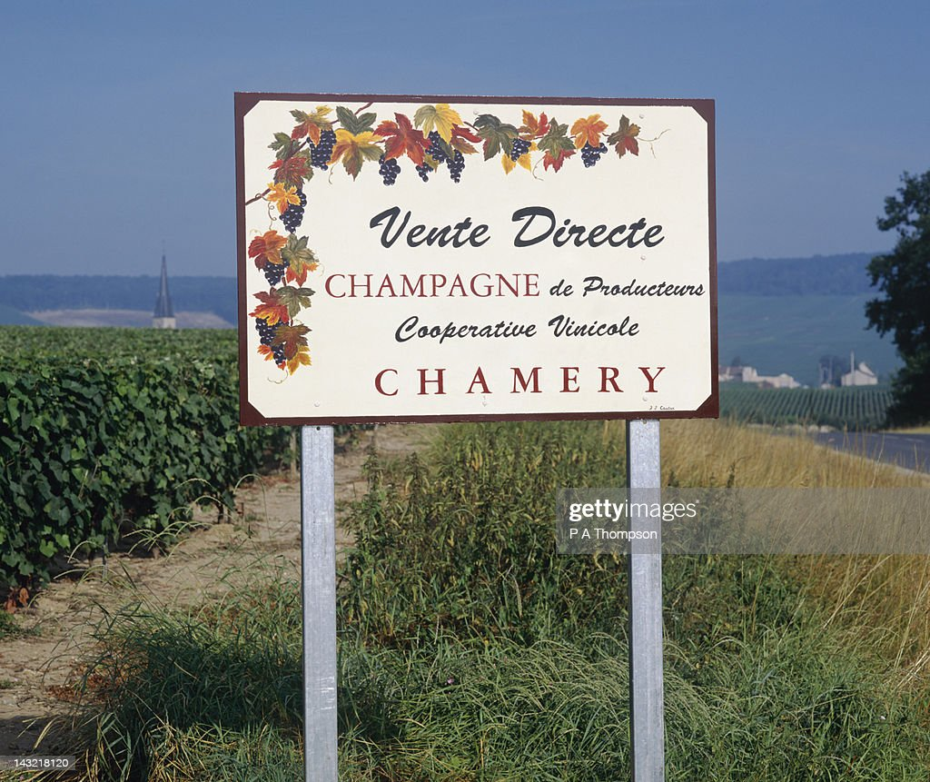 Vineyards on Champagne Route, Epernay, Marne, France : Stock Photo