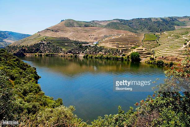 Vineyards sit on the hillside as the river Douro flows through the valley near Peso da Rgua Portugal on Thursday July 17 2008 Three centuries after...