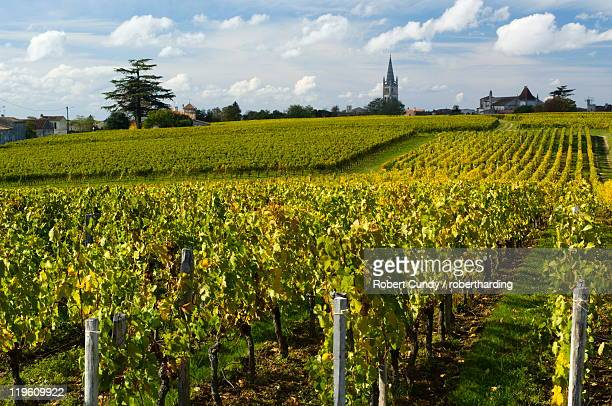 Vineyards, St. Emilion, Gironde, France, Europe