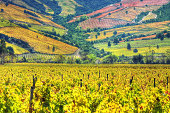 Vineyards  (HDR) - Valle Colchagua