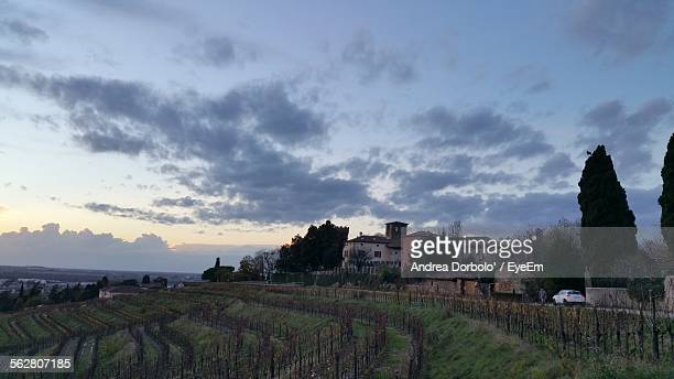 Vineyards With Houses In Background