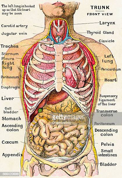 Bowel Anatomy Stock Photos And Pictures Getty Images