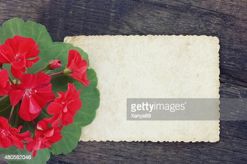 Vintage background with scarlet geranium : Stock Photo