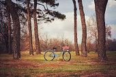Vintage Bike at Picnic