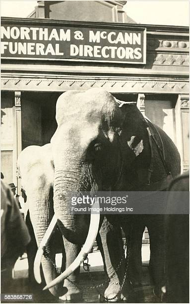 Elephants in Front of Funeral Parlor