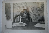 Vintage photo of dachshund dog in hat at birthday party with cupcake