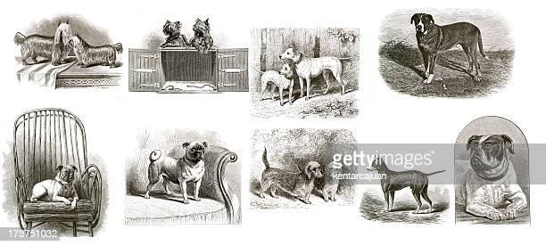 Vintage Dogs Collection