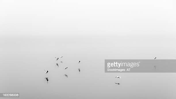 Vintage European Seagull Black and White