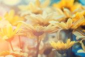 Vintage flower lawn for background