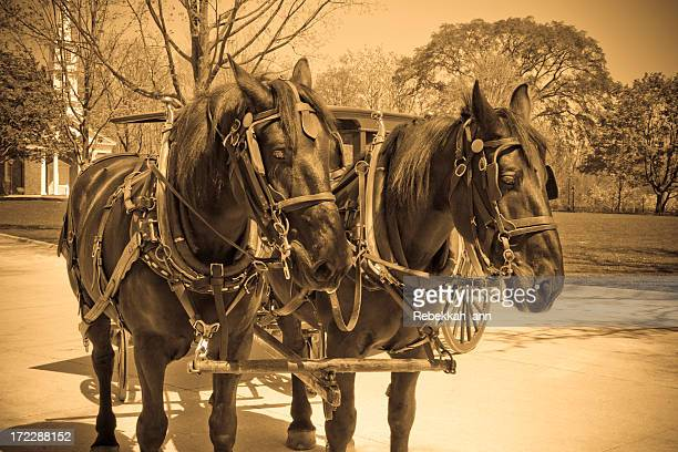 Vintage Horse n' Buggy