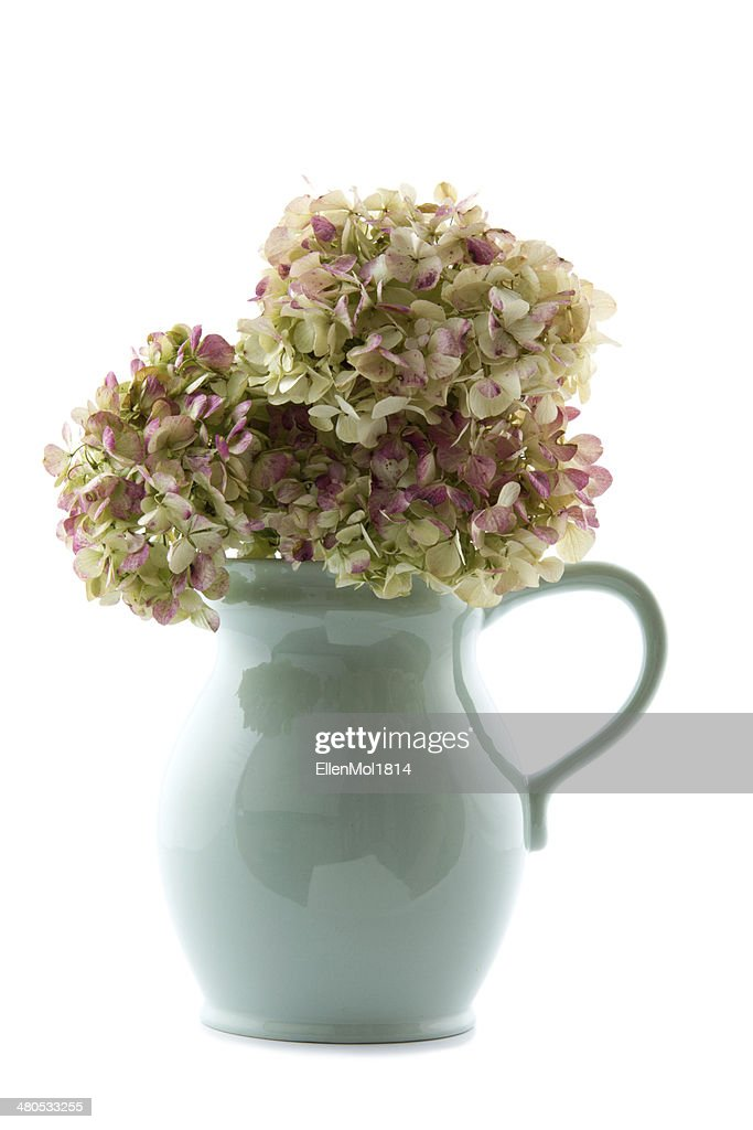 vintage hot chocolate jug with dried hydrangea flowers : Stock Photo