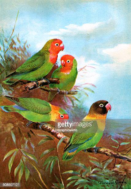 Vintage illustration by Roland Green of four redheaded lovebirds in their natural habitat 1927 Screen print