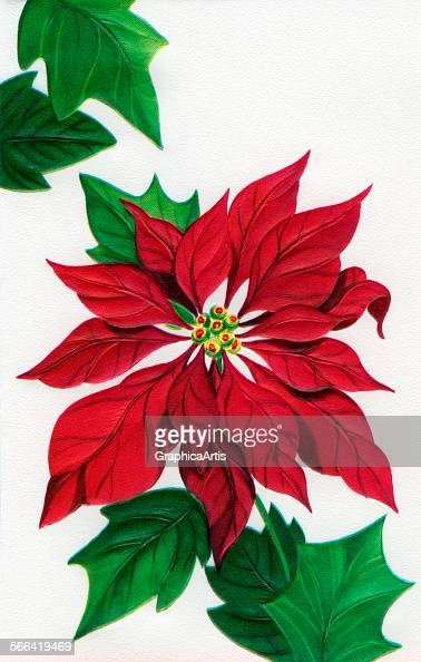 Christmas Poinsettia Design Pictures Getty Images