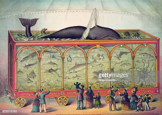 Vintage illustration of a large travelling circus aquarium filled with sharks alligators seals octopus narwhal whale and a spouting sperm whale...