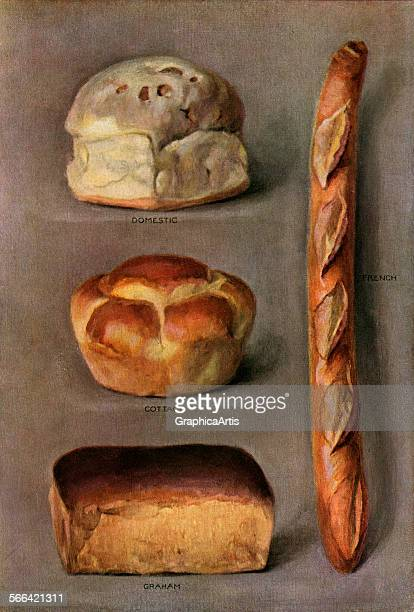 Vintage illustration of four types of baked breads domestic cottage graham and French baguette screen print 1911