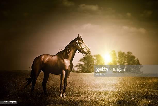 Vintage Foto von horse
