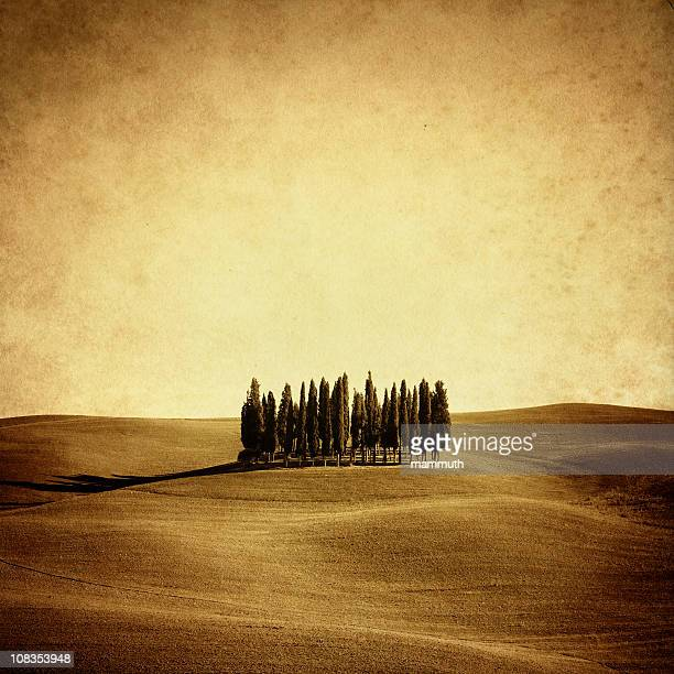 Vintage photo of italian cypresses