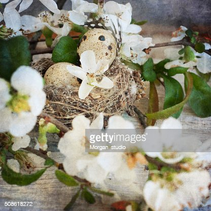 Vintage style, fresh apple flowers, spring flowers : Stock Photo