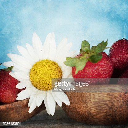 Vintage style, fresh daisy flowers, spring flowers : Stock Photo