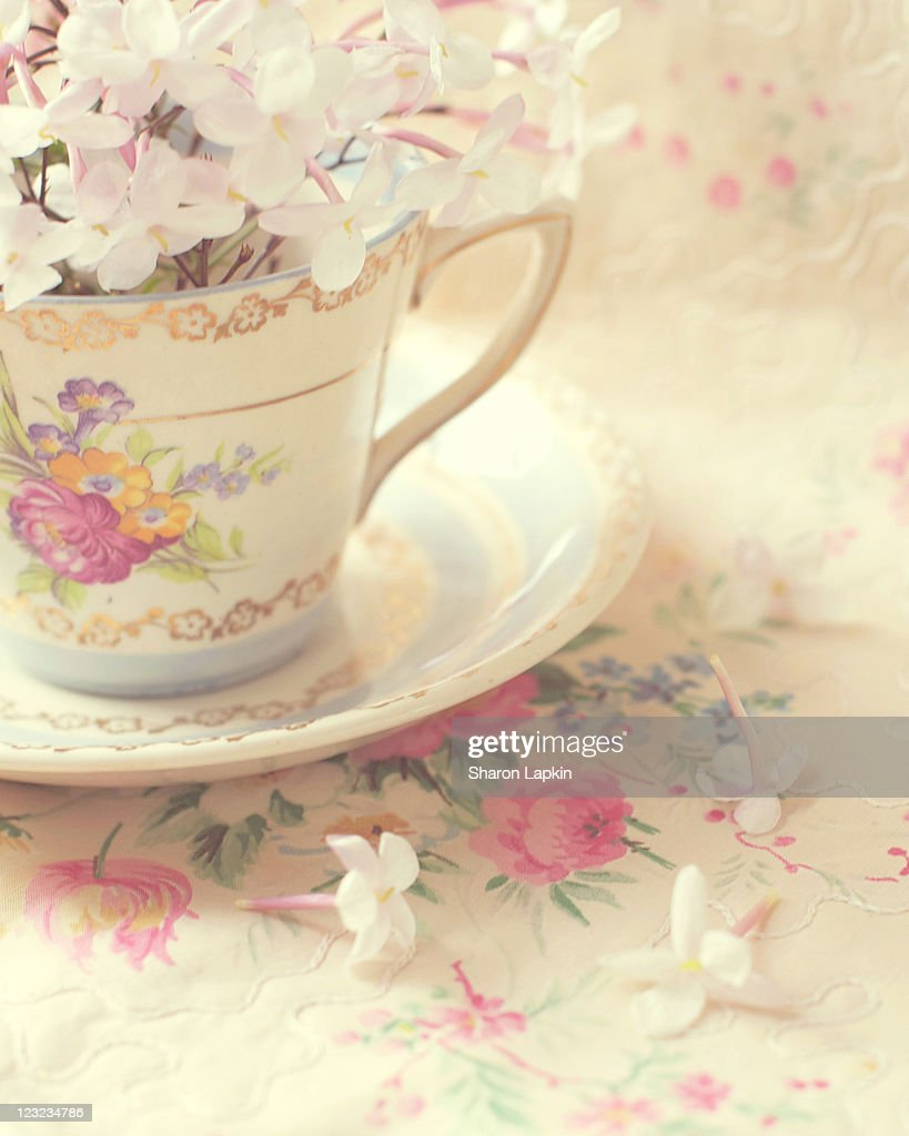 Vintage teacup and saucer filled with fresh jasmin : Stock Photo