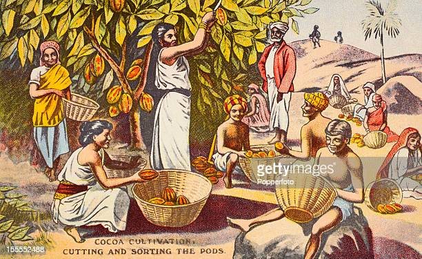 A vintage trade card featuring natives engaged in cocoa cultivation in India circa 1900