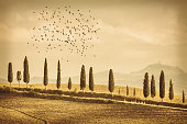 Vintage Tuscany Landscape of country road, cypresses trees and birds - Tuscany nature, Pienza, Italy, Europe