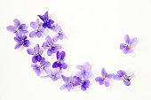 viola blossoms isolated over white background