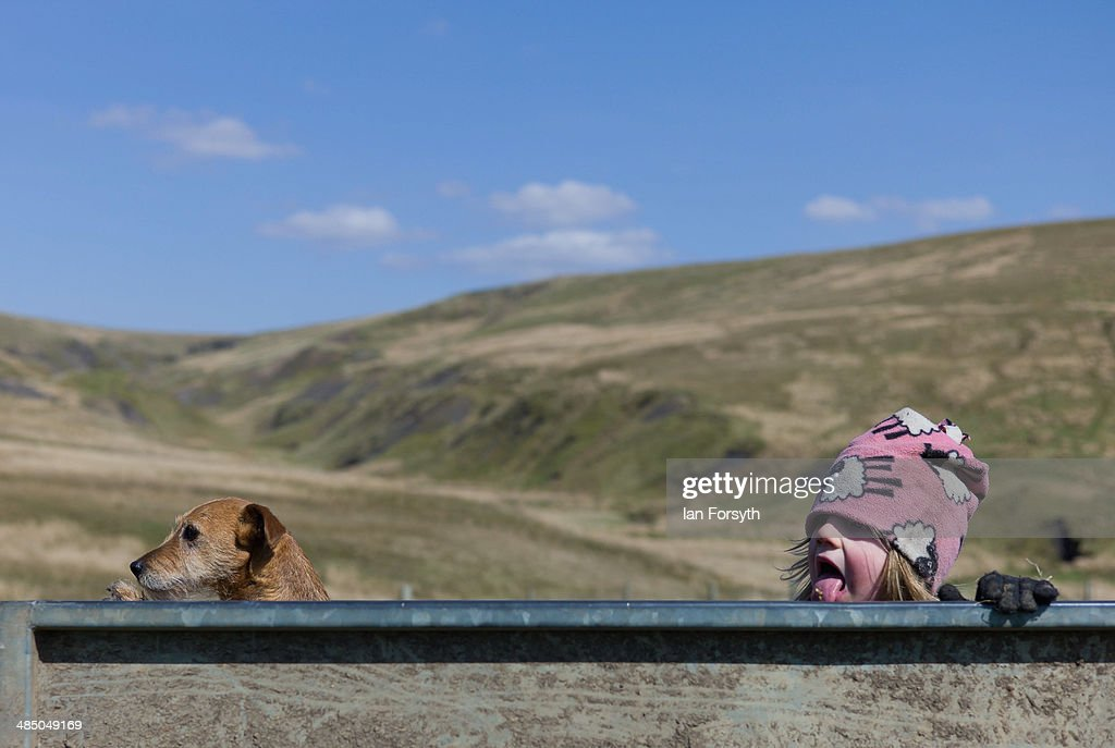 Violet Owen, 3, rides with her dog in a trailer at Ravenseat, the farm of the Yorkshire Shepherdess Amanda Owen on April 15, 2014 near Kirkby Stephen, England. Amanda Owen runs a 2,000 acre working hill farm in Swaledale which is one of the remotest areas on the North Yorkshire Moors. Working to the rhythm of the seasons the farm has over 900 Swaledale sheep that are now entering the lambing season as well as cattle and horses.