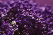 Ultraviolet color trend by nature