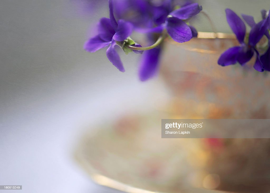 Violets in a vintage cup : Stock Photo