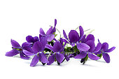 Bunch of violets, over white background.  More flowers: