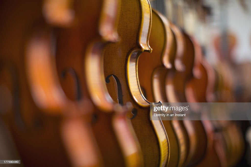 Violins in a row in a shop : Stock Photo