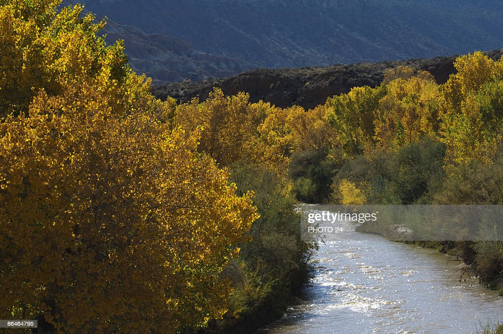 Virgin River flowing through forest, Utah : Stock Photo