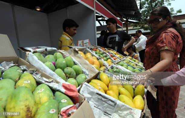 A visitor checks different varieties of mango's at sales counter during a Mango festival organised by Delhi Tourism in New Delhi on July 2 2011 The...