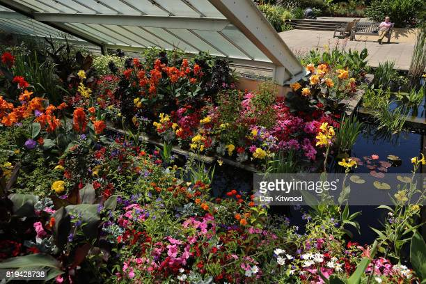 A visitor enjoys the sunshine at Kew Gardens on July 20 2017 in London England