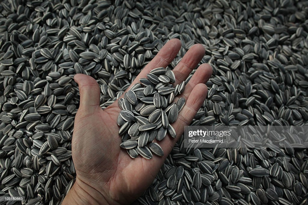 A visitor holds some seeds from Chinese Artist Ai Weiwei's Unilever Installation 'Sunflower Seeds' at The Tate Modern on October 11 2010 in London...