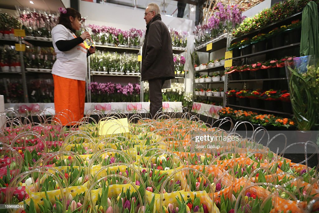 A visitor looks among Dutch orchids and tulips at the 2013 Gruene Woche agricultural trade fair on January 18, 2013 in Berlin, Germany. The Gruene Woche, which is the world's largest agricultural trade fair, runs from January 18-27, and this year's partner country is Holland. According to a recent study the average German consumes 1094 animals in his or her lifetime, including four cows, four sheep, 12 geese, 37 ducks, 46 turkeys, 46 pigs and 945 chickens.